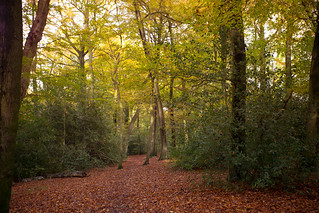 Path through Captains Wood