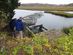 Staff from the U.S. Fish and Wildlife Service assess a clogged inlet at an old culvert scheduled to be replaced this fall to restore natural marsh.