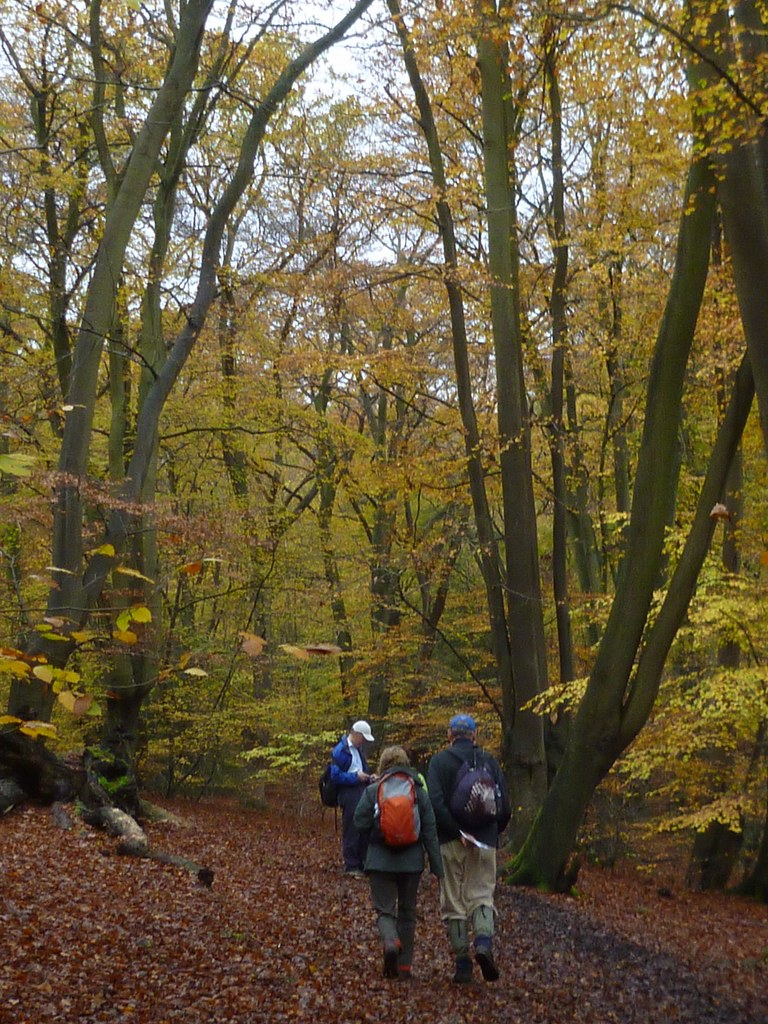 Beeches Epping 5