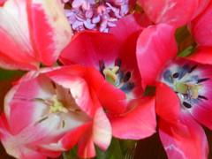 flower, flora, floristry, pink, petal,