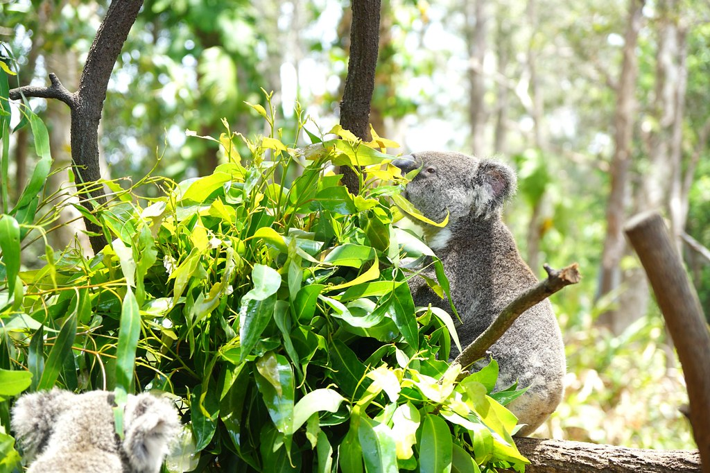 Currumbin Wildlife Sanctuary - trip review-003