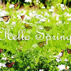 Hello Spring! #HappySpring #MarchMadness #SpringIntoAction ##SpringCleaning #SpringIsInTheAir #BugSeason #March #April #May
