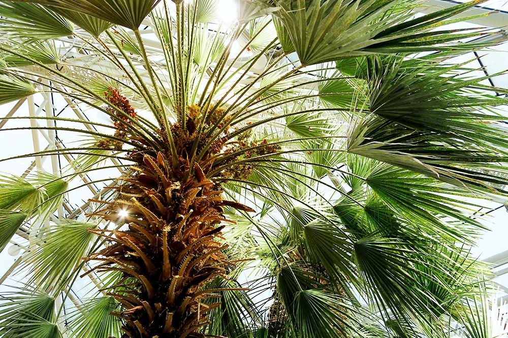 En tropisk helg i januari