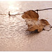 Autumn rain by aviana2