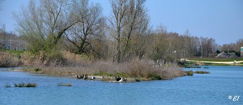 Un avant-gout de printemps au bord du lac