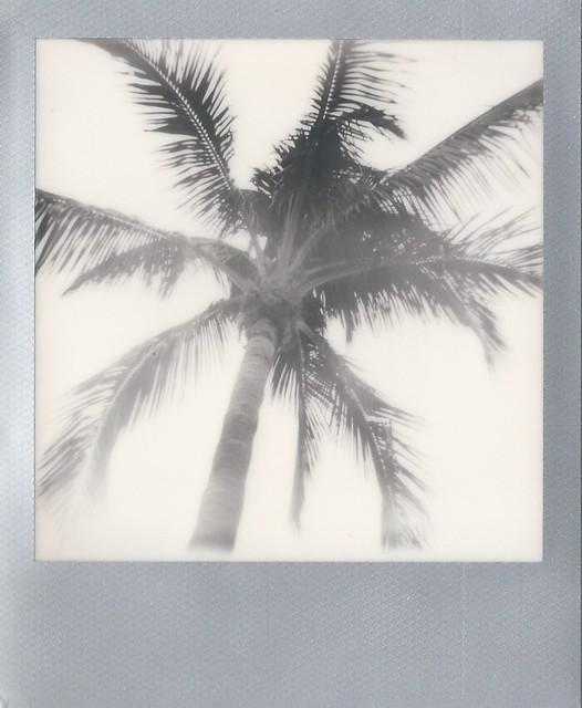 Florida Silver 1 10