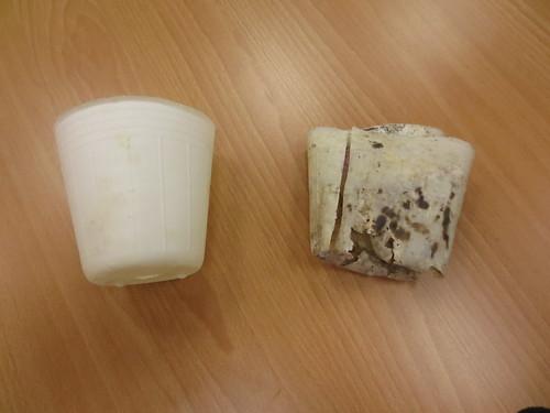 生物可分解塑膠能在自然環境中分解。圖片來源:梧桐基金會