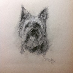 Yorkshire #dogportrait #charcoaldrawing