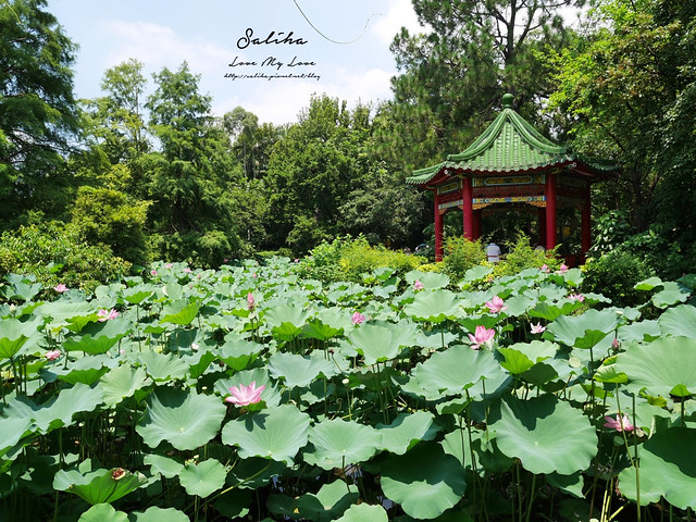 台北一日遊景點推薦植物園荷花蓮花池 (11)