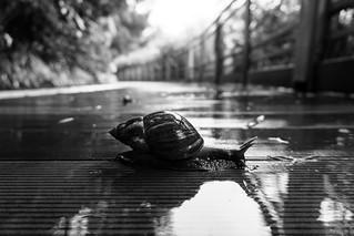 snail's pace
