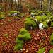 Suelos de otoño