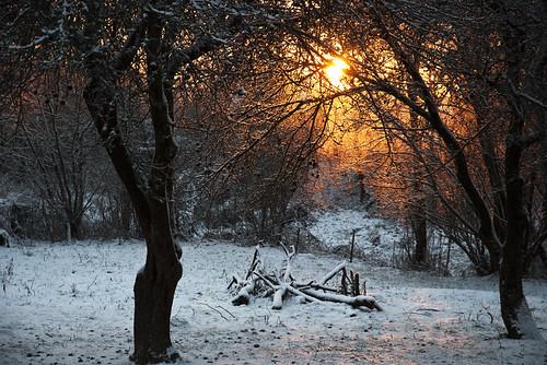 winter light sun snow tree sunrise garden sodas lithuania sniegas lietuva saulėtekis rambynas bitėnai rambynoregioninisparkas