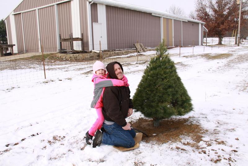 tree cut (2)