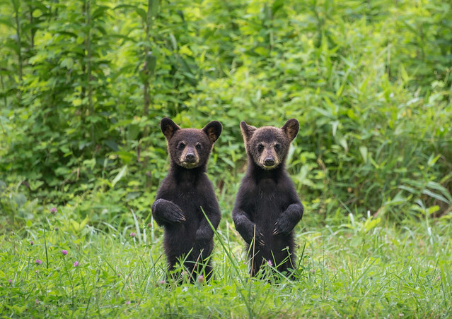 Longleaf.Photography - Mirror Image Cubs- Please Vote!
