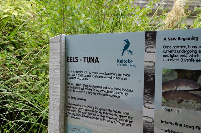 Eel Tuna