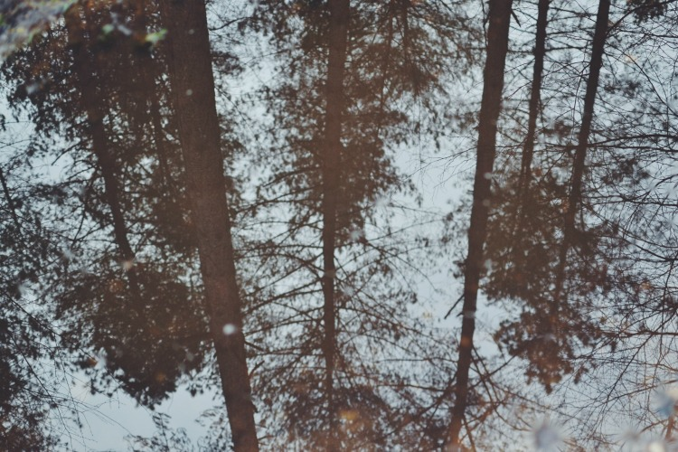 trees puddle