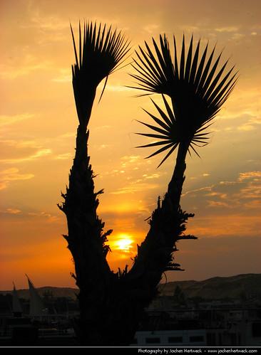 sunset sun tree zonsondergang tramonto glow sonnenuntergang egypt palm nile pôrdosol egipto nil aswan ocaso 日落 ägypten egitto coucherdesoleil egito solnedgang apus solnedgång закат assuan auringonlasku égypte 埃及 日没 zachódsłońca エジプト assouan أسوان 이집트 залез asuán matahariterbenam アスワン 阿斯旺 assuão mặttrờilặn 아스완 асуан