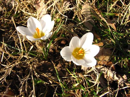 spring...finally