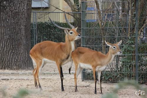Berliner Zoo 22.02.201555