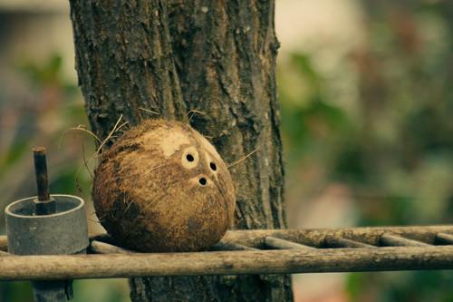 Day56/365 Coconut head