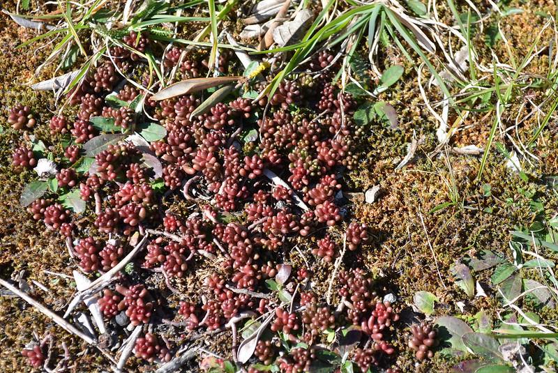 Orchidées 'in situ' 16677938596_300602835c_c