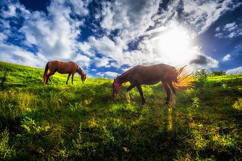 Cavalos do Sol - Horses of the sun