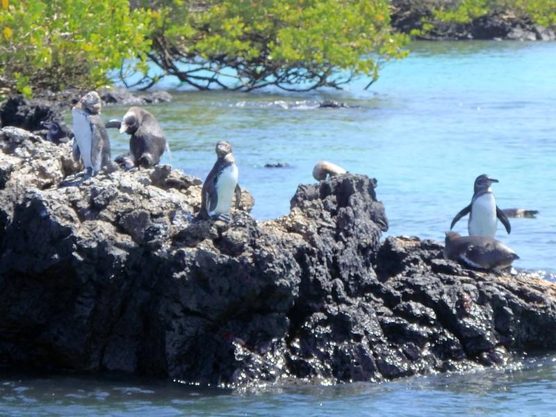 Las Tintoreras: Galápagos