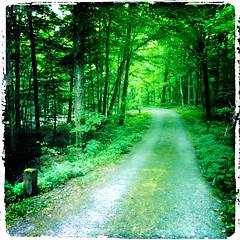 """""""Moonlight on Vermont"""""""