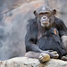 Mother and Baby Chimp by Muzzlehatch