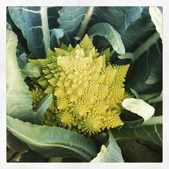 farmfest003romanesco