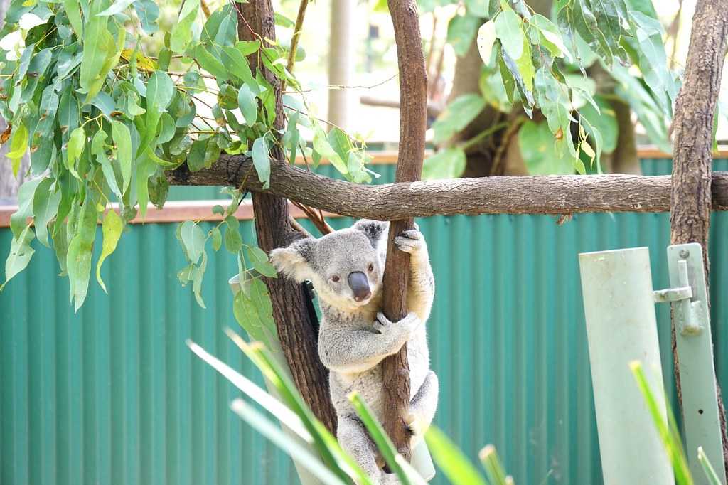 Currumbin Wildlife Sanctuary - trip review-004