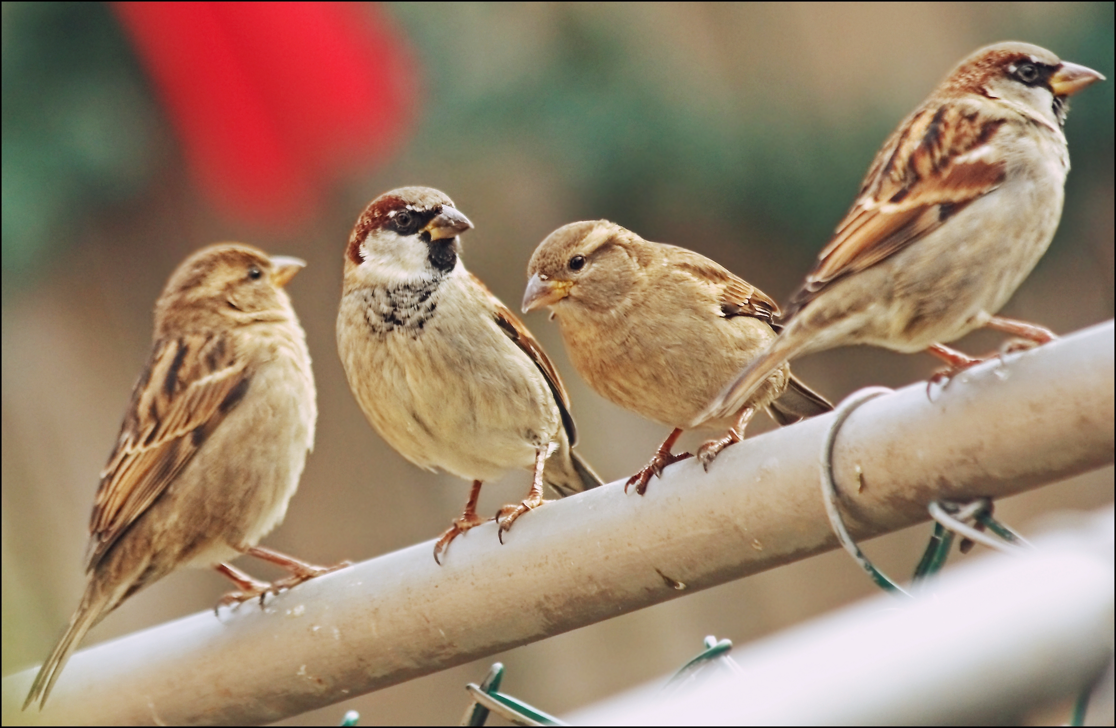 No Sun...So, So Shots Without. light, sun, canon, no, low, sparrows, 60d, testingmyeditingskillsugh. buy photo