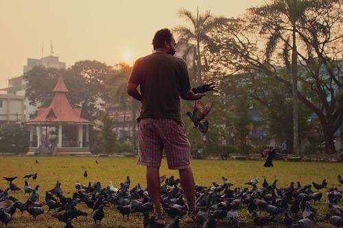 charity morning sun india man cute bird love birds sunrise nikon pigeons kerala rise pigeion