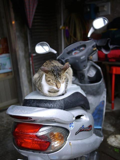 bikecat2.min_