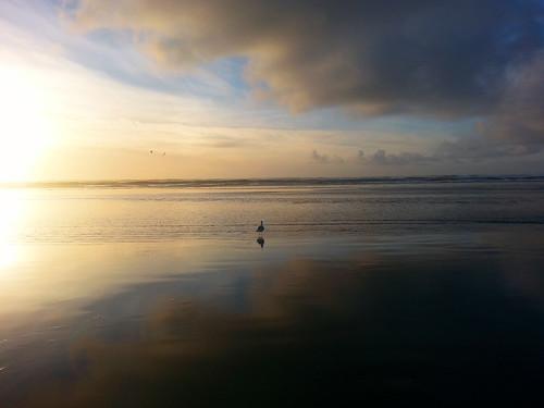ocean blue beach beautiful seagull beautifulclouds julieolsenartcom longbeachwashingtonsunsetonthebeachlongbeachwashington