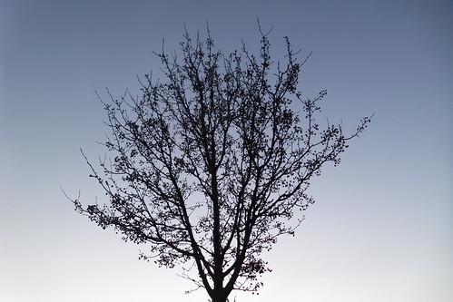 Il tramonto visto da un albero