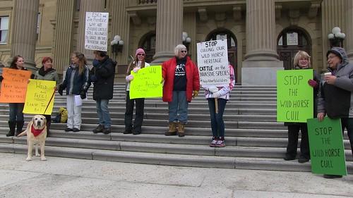 Edmonton Rally for Wild Horses