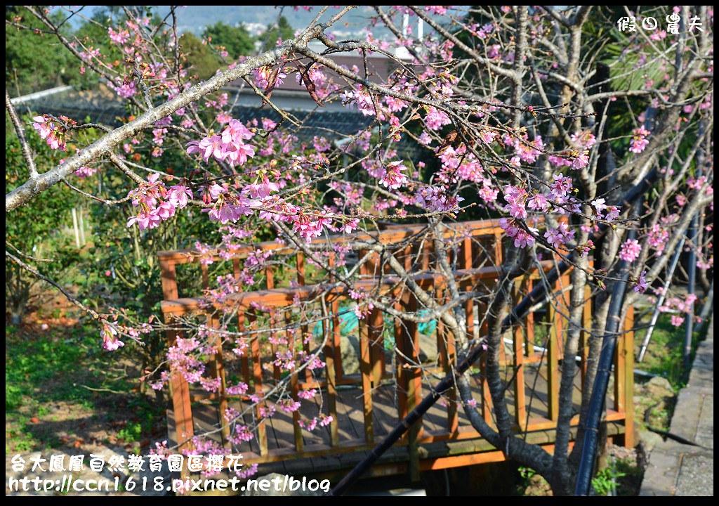 台大鳳凰自然教育園區櫻花DSC_6117