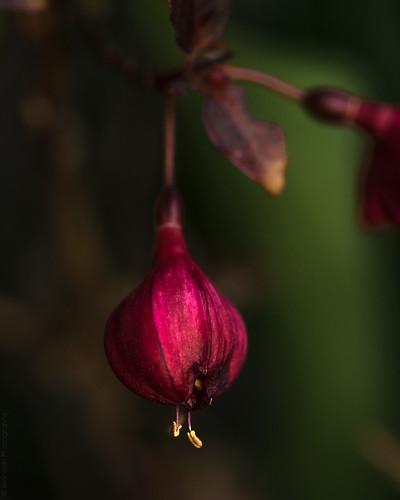 Fuchsia // 19 03 15