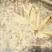 79/365 - Dreamy Garden by carankin