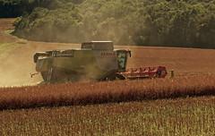 la récolte du grain 3
