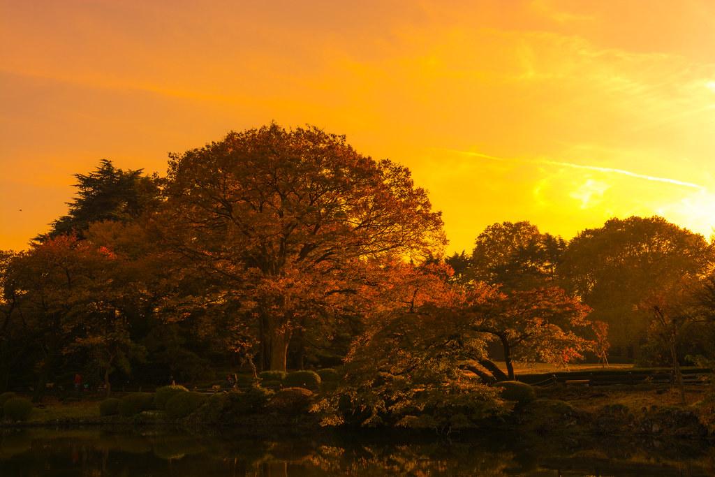 Autumn Trees in the Dusk
