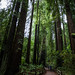 Muir Woods by mirsasha