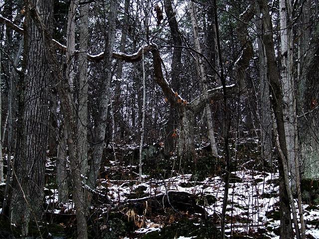 crazy oak