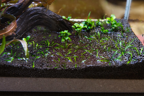 Filling a tank with fresh UpAqua Aquasand substrate