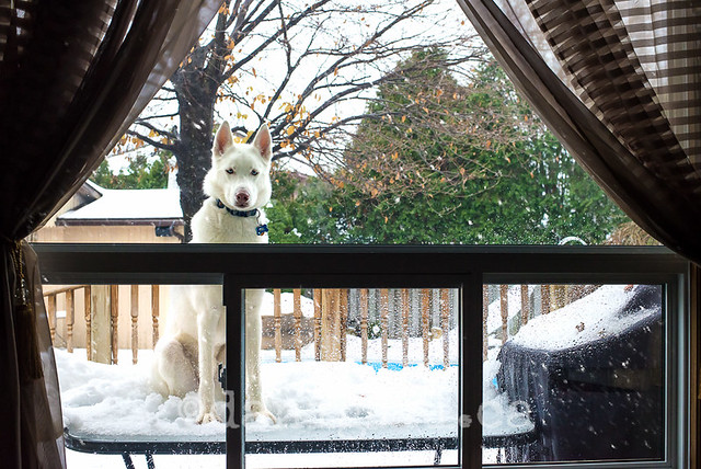 Yoo hoo, can I come in now?
