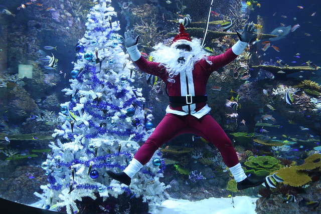 S.E.A. Aquarium - Have a Merry Fishmas and meet Scuba Santa and his elf