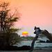 Makalawena beach sunset with log
