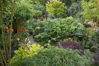 Jungle edge and middle garden in summer