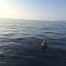 Humpback Whale by Christine Rondeau
